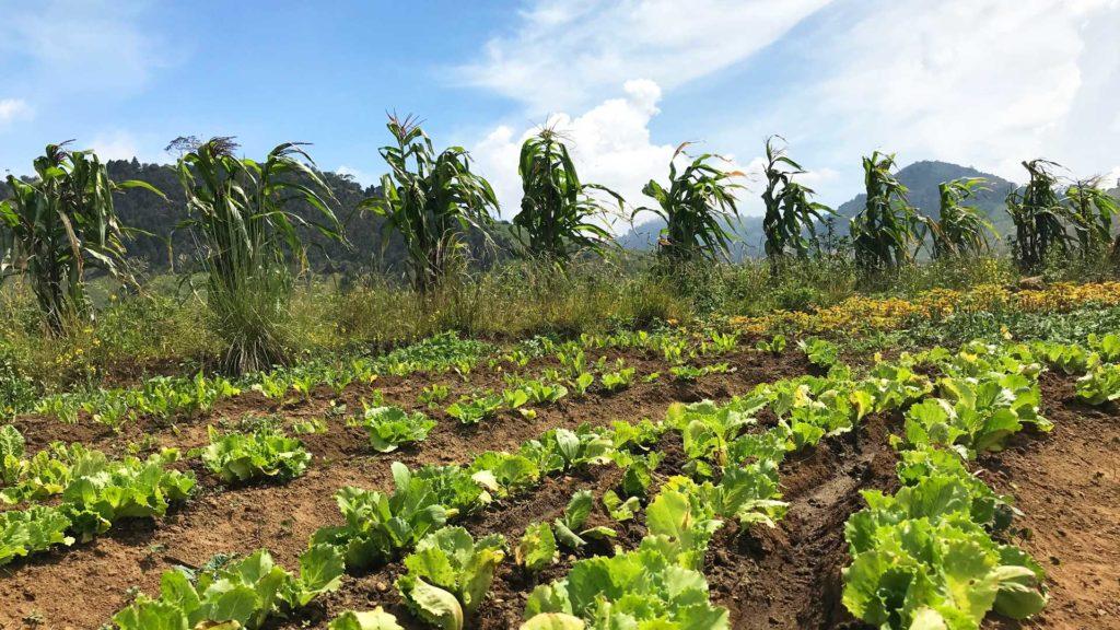 Agriculture Quetzaltenango